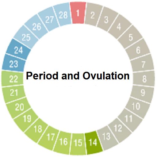 calendar menstrual zile fertile