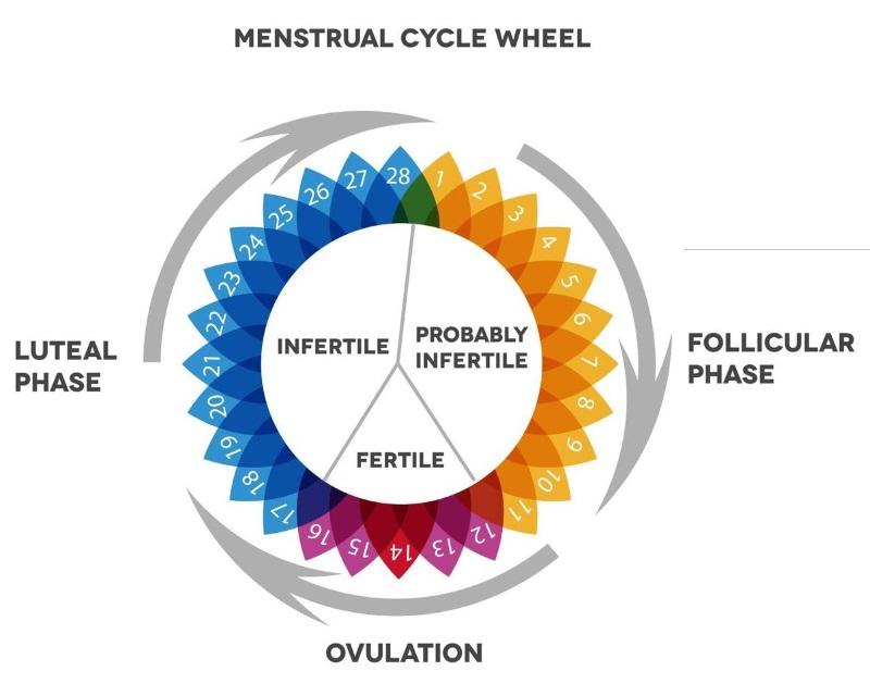 Cand stiu cand sunt la ovulatie?